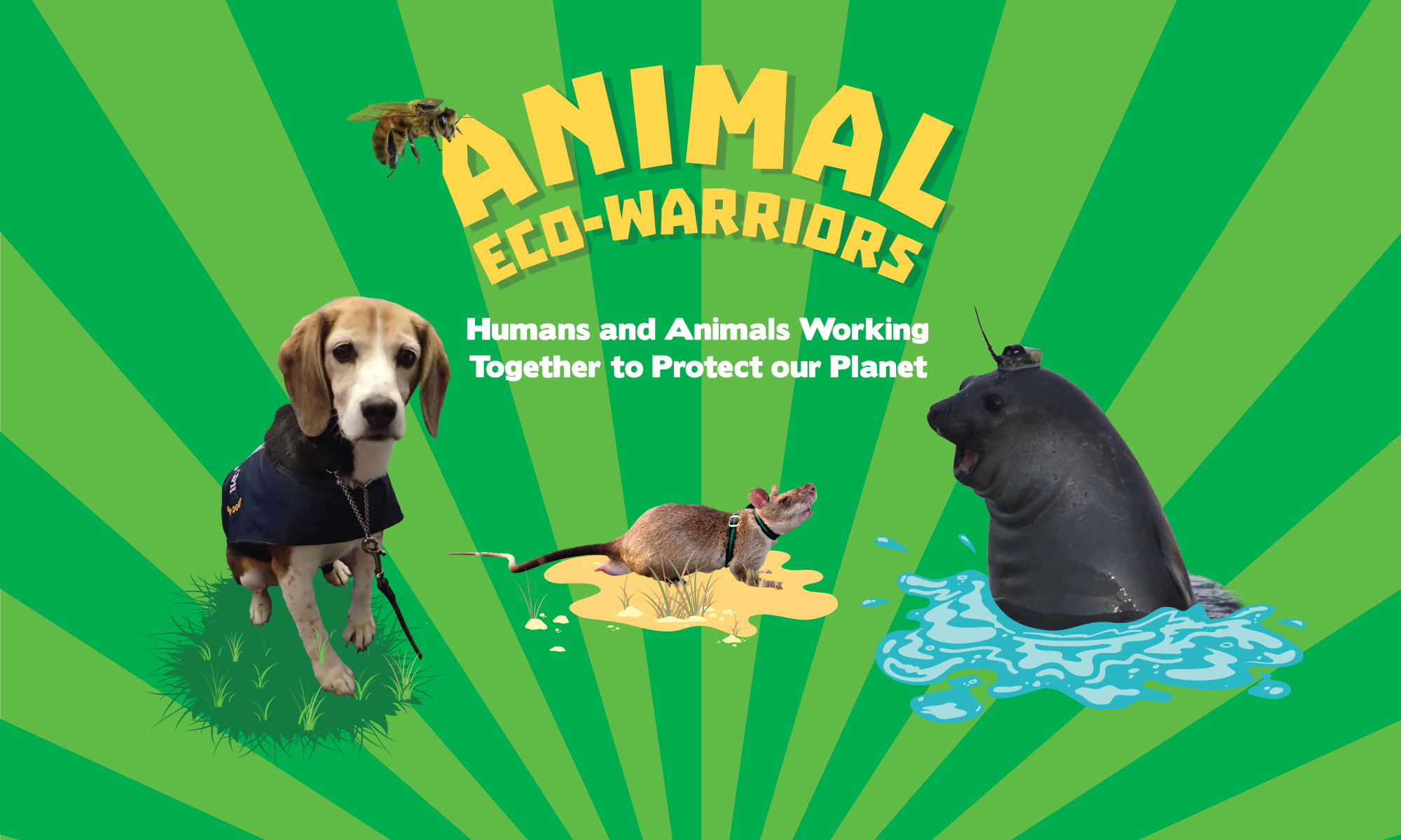 Animal Eco Warriors